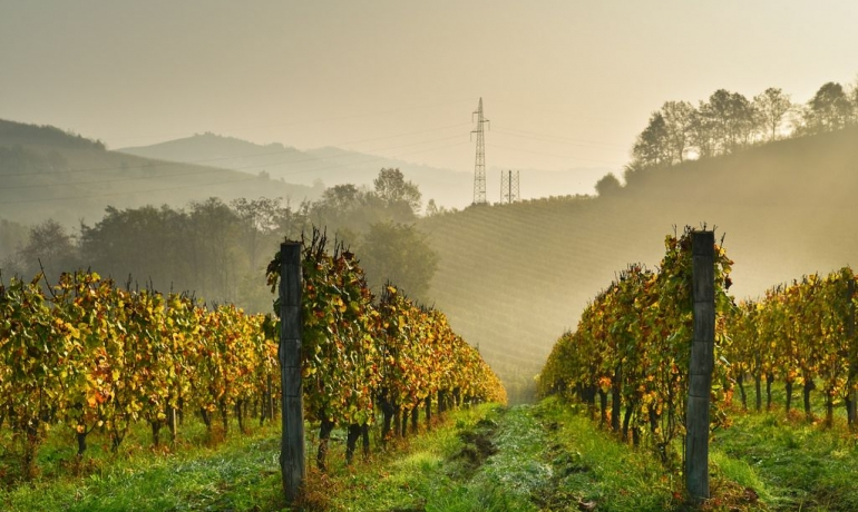 Winery in Bistagno with wonderful views over the hills of the Langhe, UNESCO Heritage